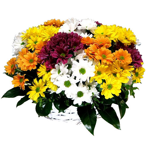 Sweet Mixed Daisies in a Basket