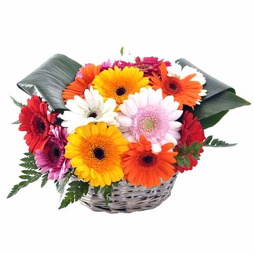 Joyful Basket of Multi-Colored Gerberas