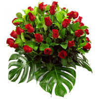 Lovely Arrangement of 2 Dozen Red Roses