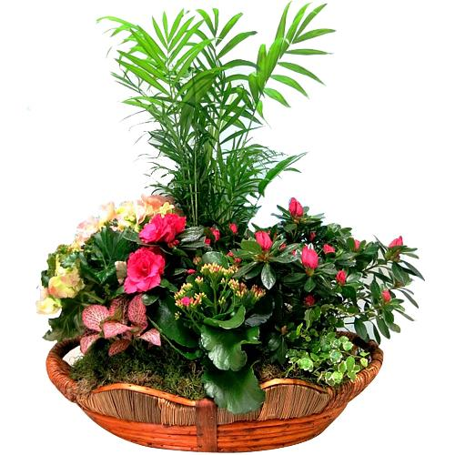 Color-Coordinated Display of Floral Plants in a Basket