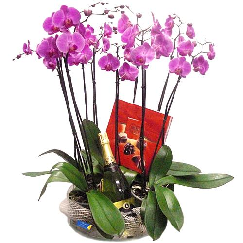 Magical 4 Pahlenopsis Orchids Paired with Chocolates N Cava