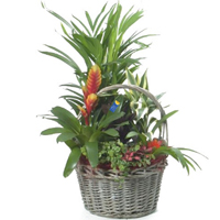 Fascinating Display of Various Plants in a Basket