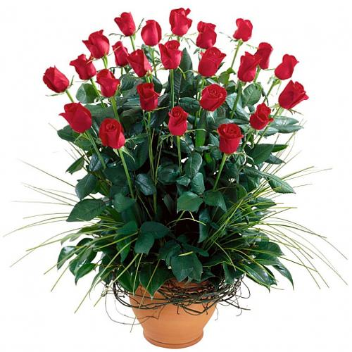 Silky Full of Love Twenty Four Red Roses Arrangement