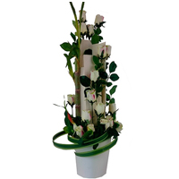 Unique Selection of�White Roses with Bamboo Canes �