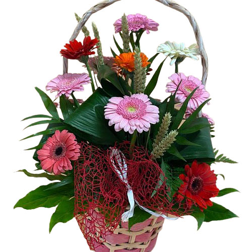 Aromatic Mothers Day Special Mixed Gerbera Basket<br>